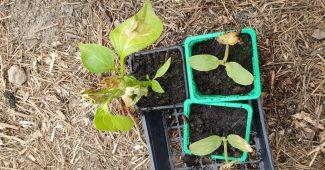 légumes en pot bio