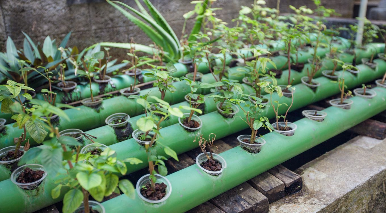 plantation aquaponie