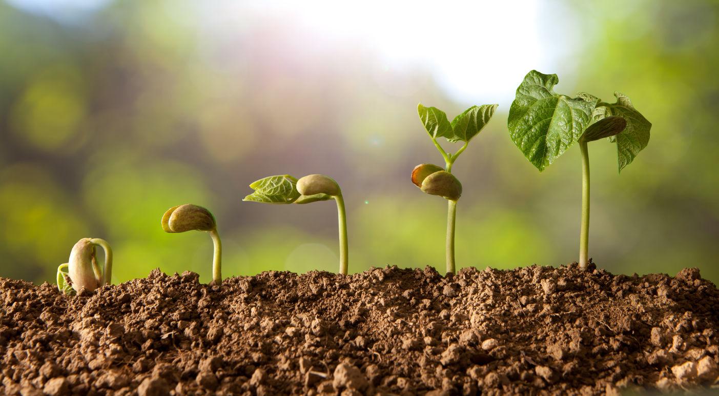 graine semis pousse